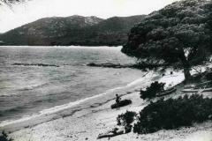 Marine_215